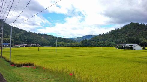 大竹市栗谷 風景2