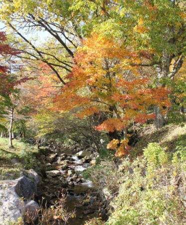 ひろしま県民の森 公園センター周辺の紅葉2