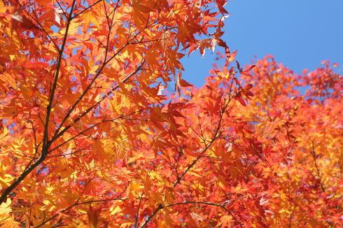 ひろしま県民の森 紅葉の様子