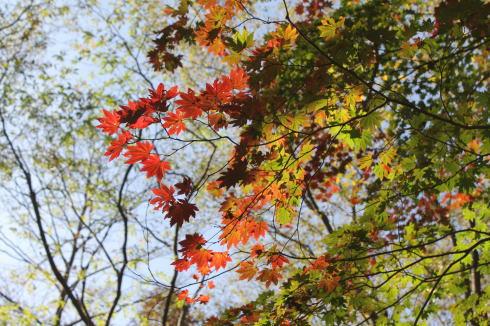 ひろしま県民の森 から登山 毛無山2