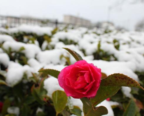 庄原 雪の風景 画像