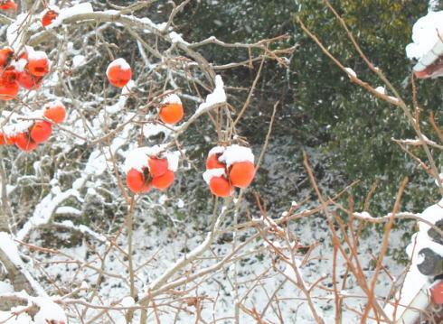 雪景色 画像