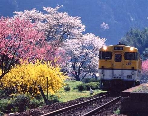 安野花の駅公園 画像