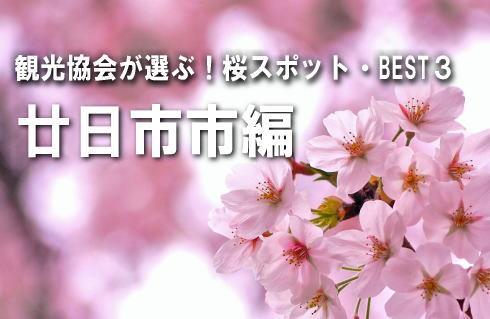 観光協会が選ぶ!桜スポットBEST3【廿日市市編】