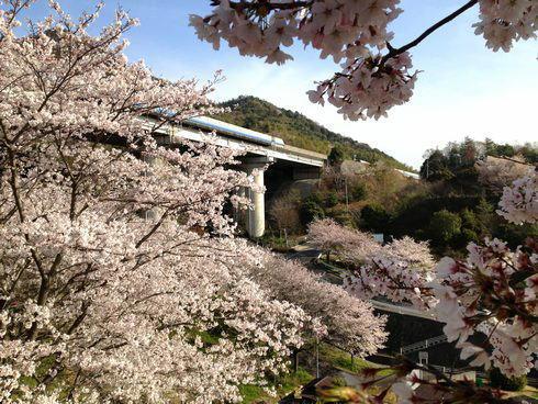 大田神社 桜の様子