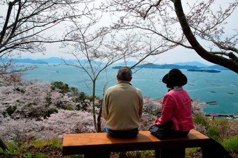 正福寺山公園 桜の写真