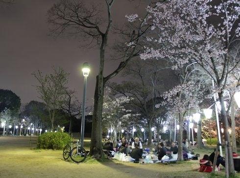 比治山公園 夜桜