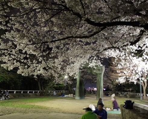 比治山公園 夜桜 画像4