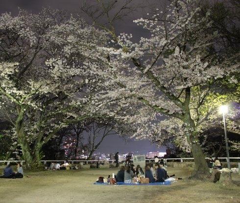 広島・比治山公園の夜、桜がそっと飾る風景