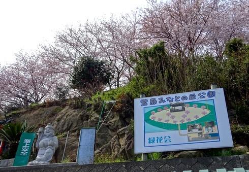佐木島 港の丘公園の桜 画像2