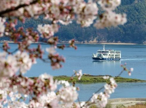 佐木島 港の丘公園の桜 画像7