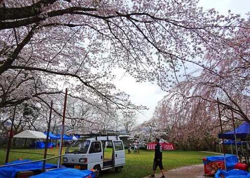 尾関山公園の桜 画像6