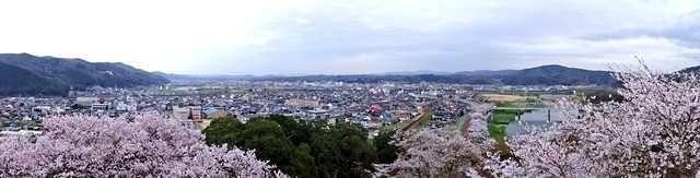 尾関山公園の桜 画像5