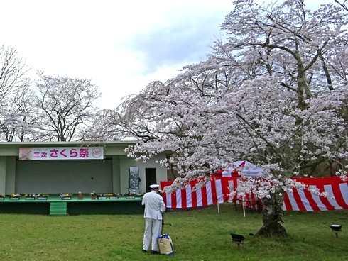 尾関山公園の桜 画像7