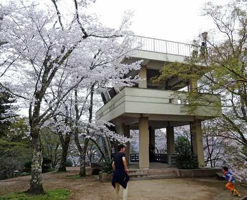 尾関山公園の桜 画像3
