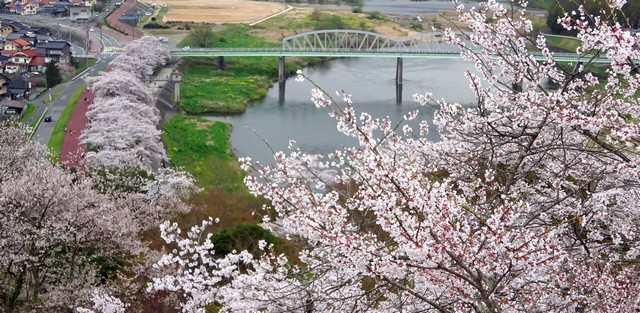 尾関山公園の桜、季節感じる春の風景