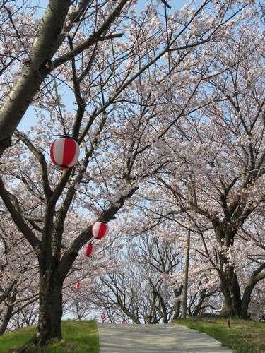 佐木島 塔の峰千本桜 画像7