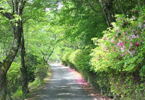 神乃倉山公園 の写真