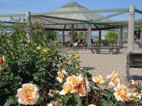 緑町公園 ばら園 画像4