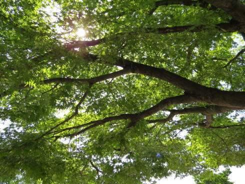 緑町公園の画像