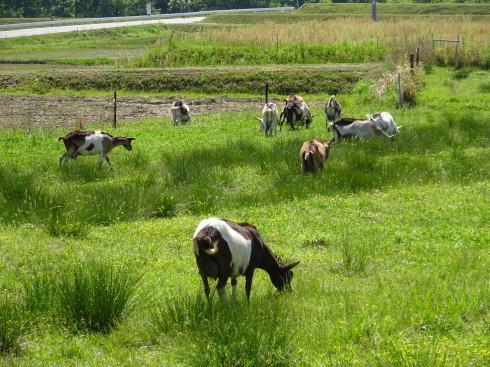 三良坂フロマージュ 牧場の画像2