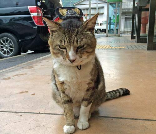 猫の駅長、志和口駅のりょうまくん