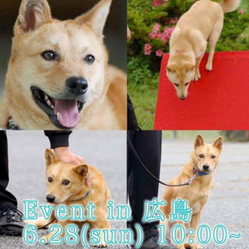災害救助犬 夢之丞・世界一有名なシバ犬まる が神石高原でご対面