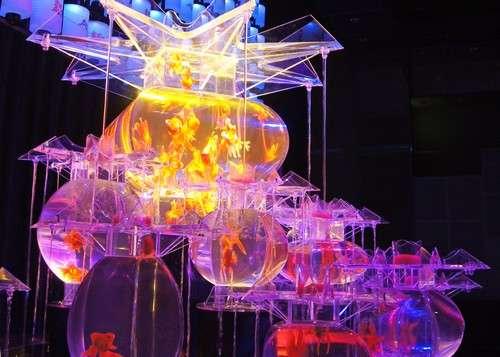 金魚と光のアート展が広島クレドホールでスタート