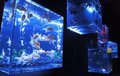 アートアクアリウム展 広島の写真3