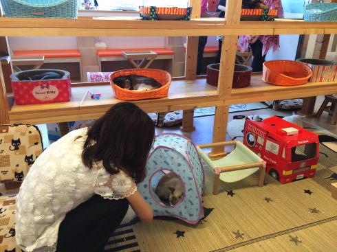 広島の猫カフェ バロン 店内の写真2