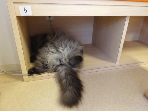 広島の猫カフェ バロン 店内の写真4