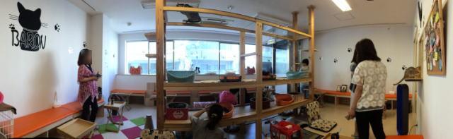 広島の猫カフェ バロン 店内の写真ワイド
