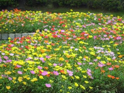 100m道路など、広島市の街中に花と緑が溢れている風景
