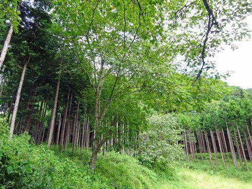 まなびやカフェ の周りの森
