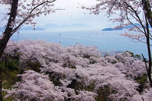 美しすぎる花見スポット、正福寺公園