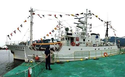 魚に触れて調査船にも乗れる!水産研究所の一般公開で