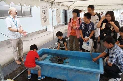 水産研究所で魚に触れあう