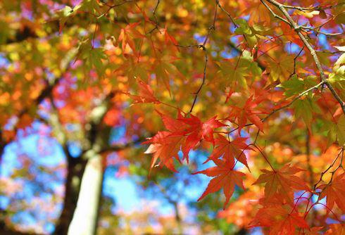 帝釈峡 紅葉の写真