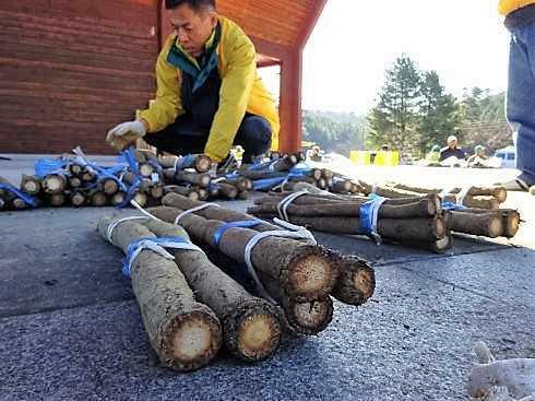 諸田ごんぼう祭り、極太の高級ゴボウが飛ぶように売れる!府中市で年に1度の即売会