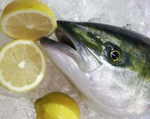 レモンハマチ(あたたハマチ)、大竹市 阿多田島で育ったフルーツ魚