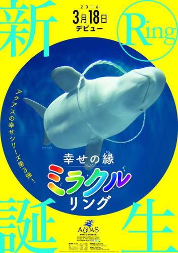 シロイルカの「ミラクルリング」島根アクアスでバブルリングの新技