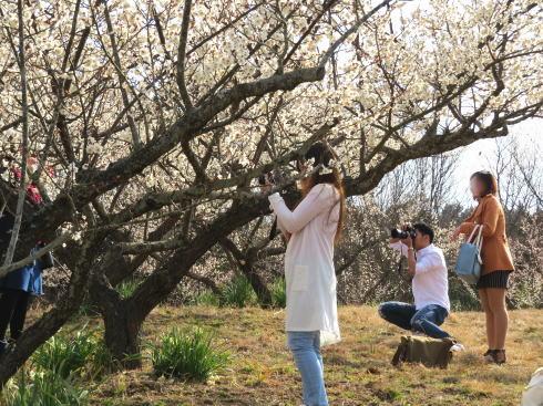 三原 満汐梅林 園内の様子6