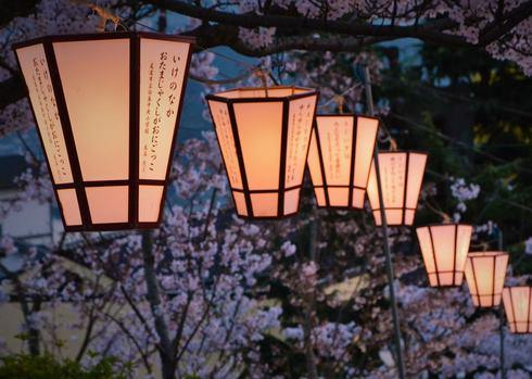 千光寺公園の夜桜とお花見 2016