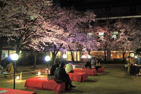 広島・縮景園で夜桜がスタート