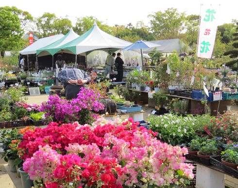 広島でグリーンフェア、花の苗や盆栽・ミニガーデンのお手本も!