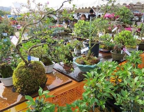 苔玉や盆栽なども。広島で春のグリーンフェア