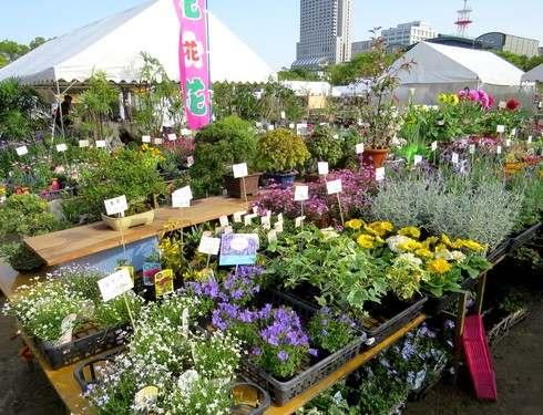 春のグリーンフェア 広島・中央公園で開催
