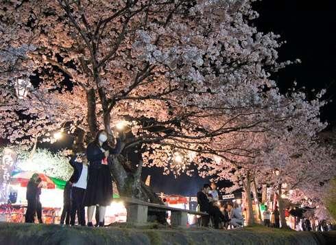 錦帯橋ライトアップで夜桜のお花見