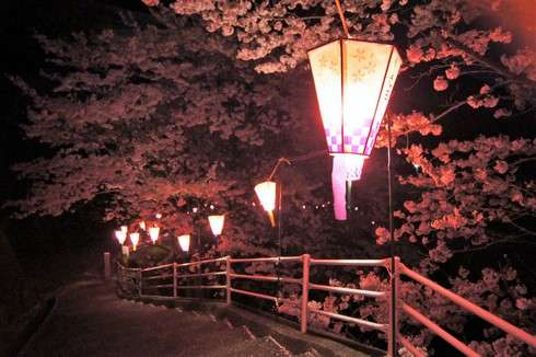 太田神社の夜桜