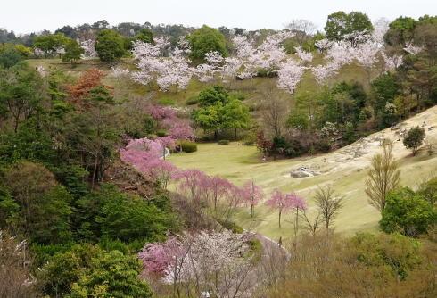 広島市森林公園 桜並木